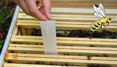 Bandelettes Varroa Apiculture